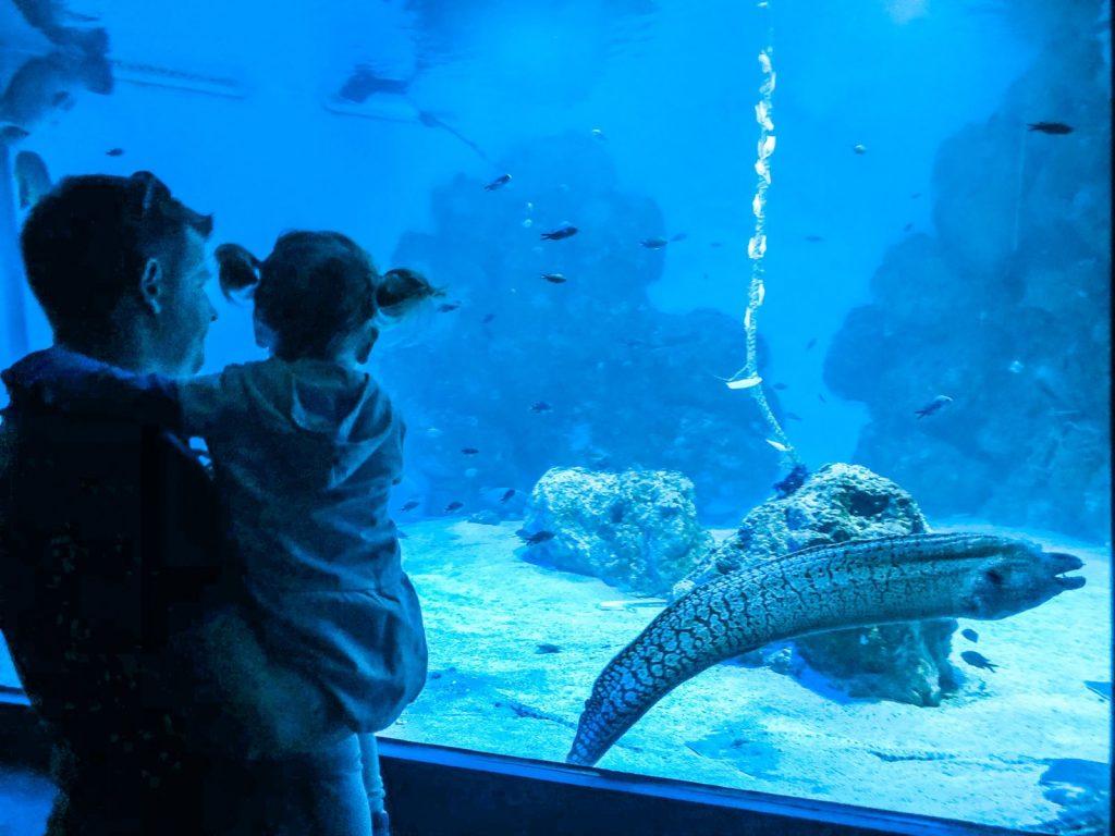 Akvarij Pula